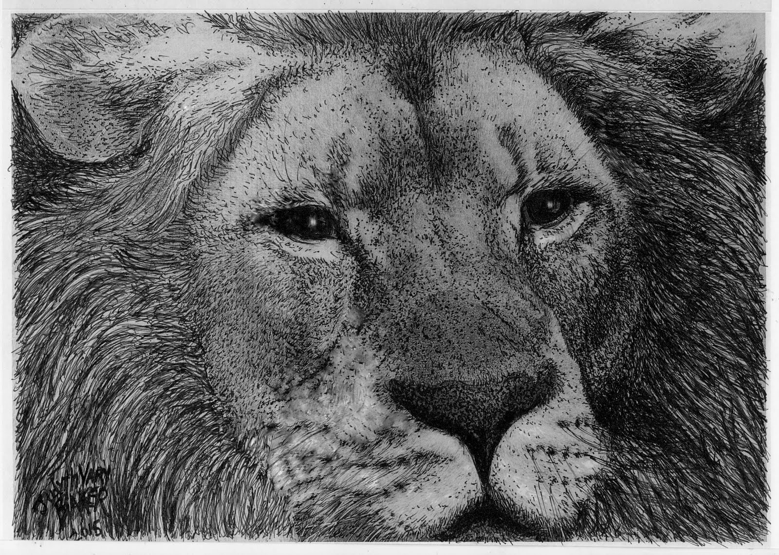 """Lion"": to Purchase, see ""Donate to the Cause"" Below..."