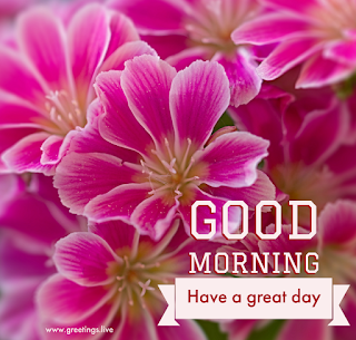 Fresh flowers Good morning have a great day greetings