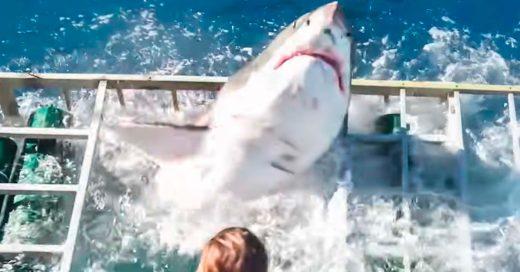 Tiburón super-agresivo se mete a una jaula con un buzo