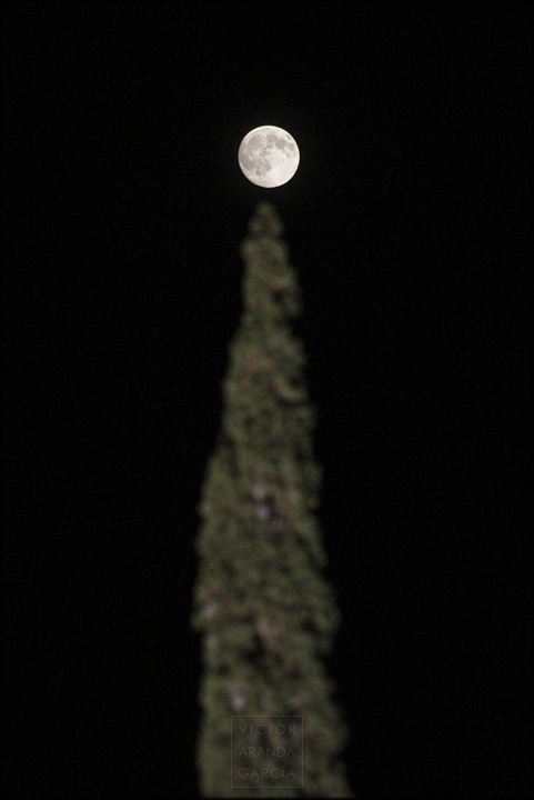 fotografia,luna_llena,fuente_alamo,arbol,cipres,limites,serie,naturaleza