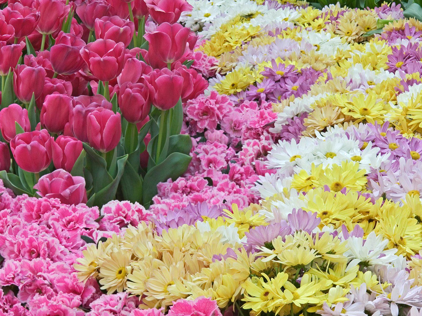 Natural Flower Wallpaper | Top HD Wallpapers