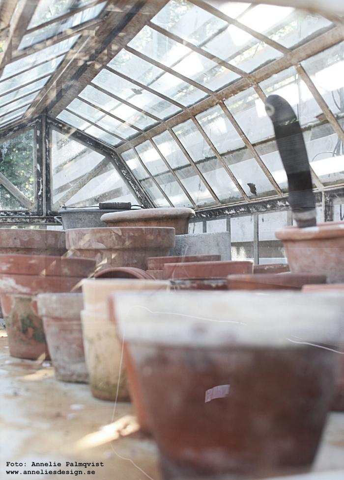 mini växthus, green house, miniväxthus, industriellt, industri, industristil, terracotta, kruka, krukor, trädgård, uteplats, trädäck, altan, trädgården, annelie, varberg