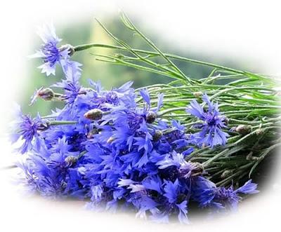 Цветок имени Мария