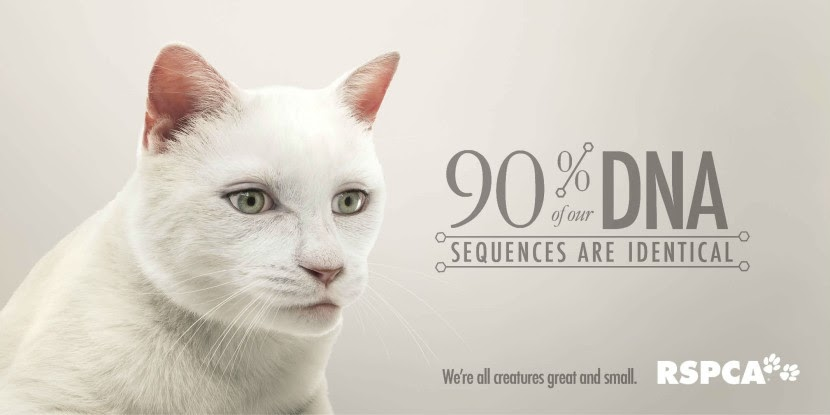 01-Cat-RSPCA-Human-Eyes-Animals-Advertising-Illustrations-www-designstack-co