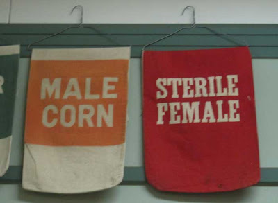 Corn seed bag reading STERILE FEMALE