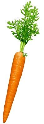 Foto de una zanahoria fresca