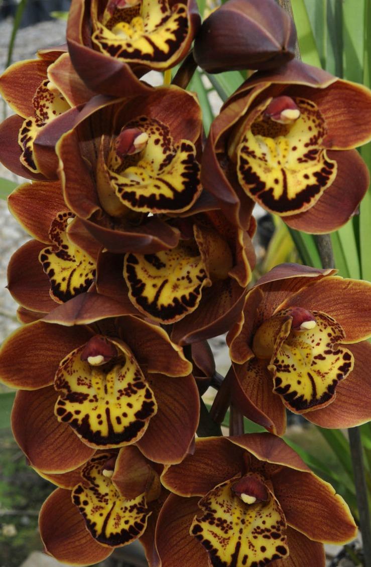 my orchids journal. Black Bedroom Furniture Sets. Home Design Ideas
