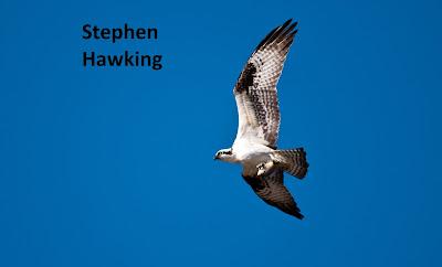 Stephen Haweking, proyecto común, proyecto de vida, proyectos personales, proyecto vocacional, visión, sueños, objetivos, vida