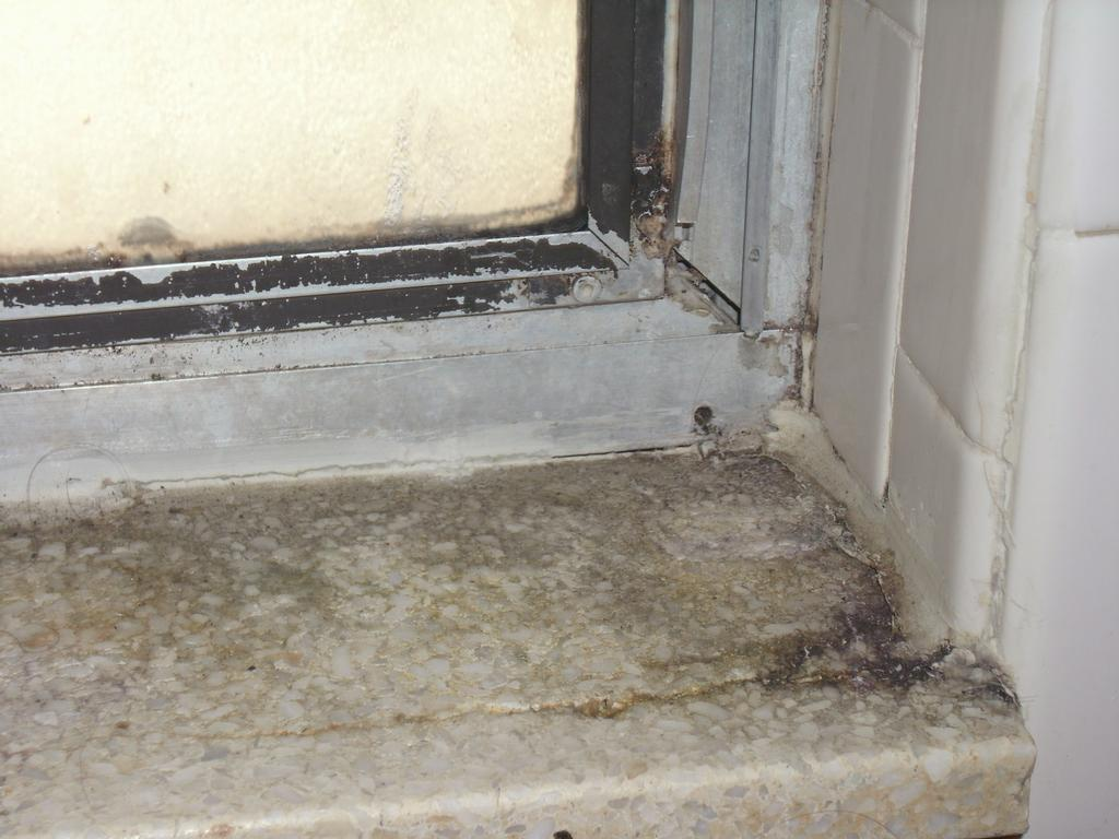 Indoor Black Mold and the effect on you and your family ...