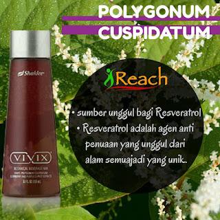 POLYGONUM-CUSPIDATUM-vivix