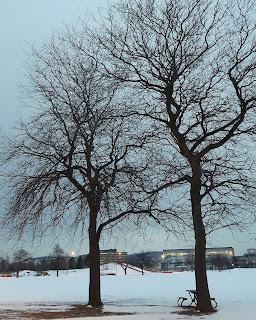 Arbres du parc Jarry l'hiver