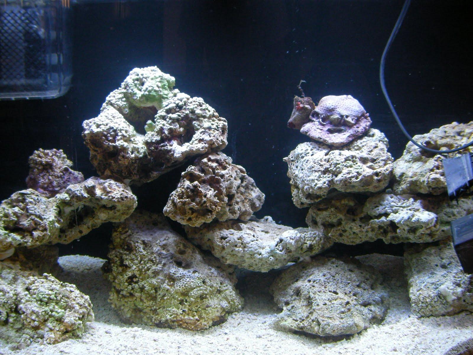 Jake's Saltwater Aquarium: Permanent Aquascaping