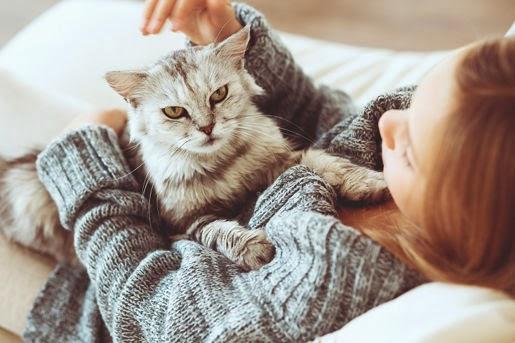 Mokre karmy Applaws dla kotów