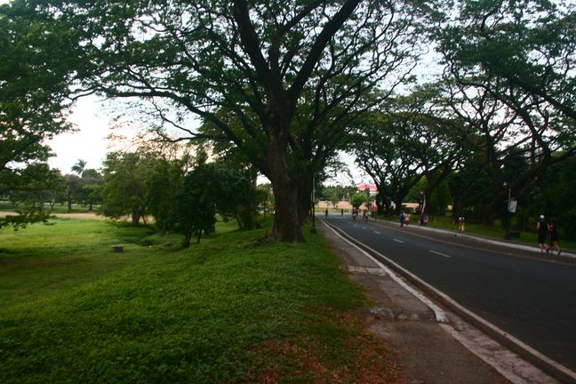 Road inside UP Diliman