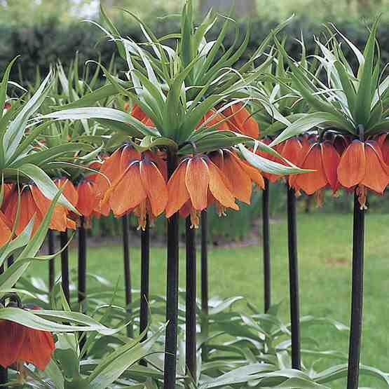 Native Plants Pakistan