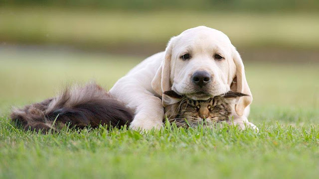 Dog catched a cat