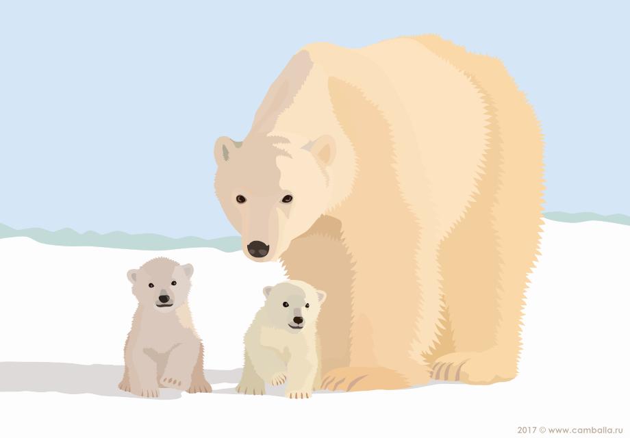 Белый медведь - большая картинка