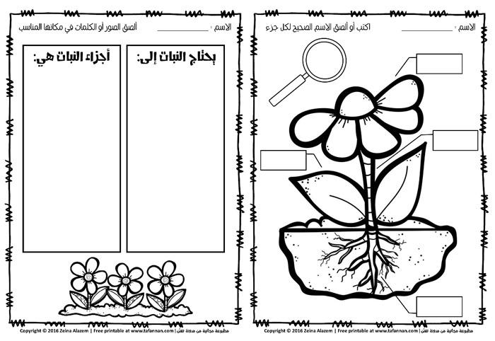 أوراق عمل النبتة الجميلة: ماذا تحتاج؟ وكيف تنمو؟ عن وحدة النبات للصف الأول