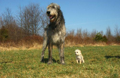 beste hondenbrokken test