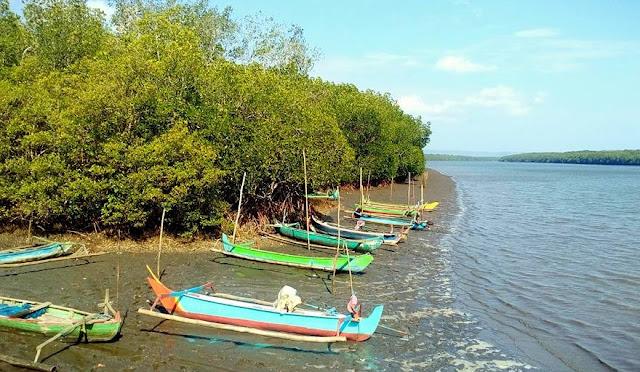 Tempat Wisata Hutan Mangrove Bedul Banyuwangi