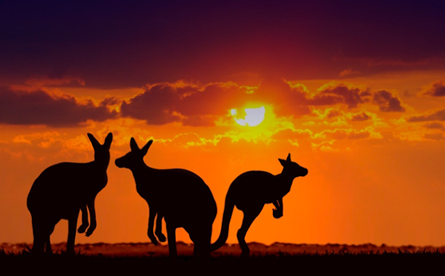 101 Travel Tips for Enjoying Australia on a Budget