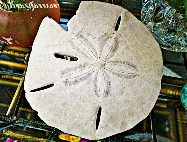 decorating , sand dollar, ocean, vignette