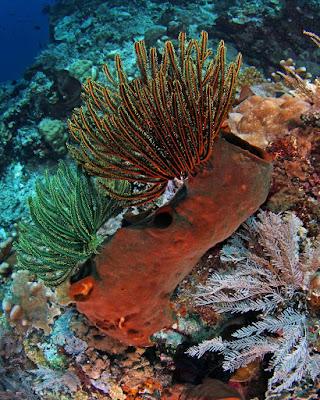 foto taman bawah laut bunaken