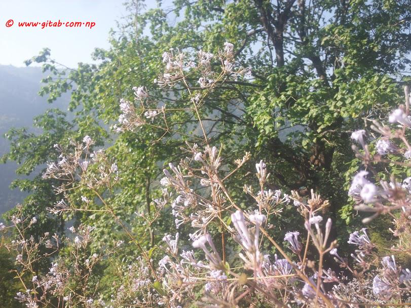 Satyawati Rural Municipality 06 Dhawa Gulmi