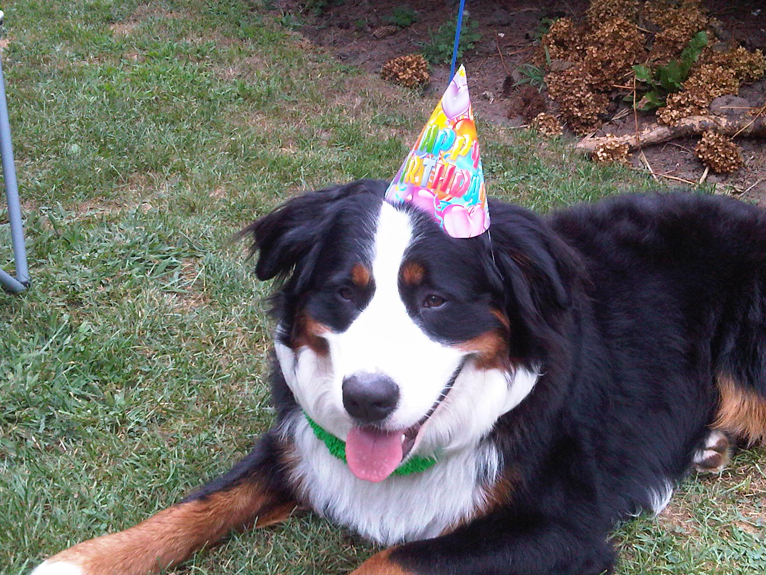 They Made Me Wear This Stupid Birthday Hat