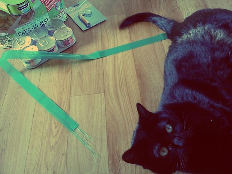 Gucci le chat et la commande Zooplus