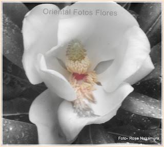 maravilhosa flor branca