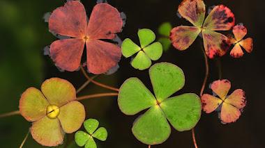 Fotos de plantas premiadas en IGPOTY N.11. Macro Art