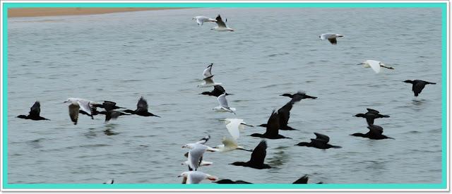 herons and seagulls