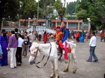 Darjeeling Chowrastha ponies go, cops to implement smoking ban
