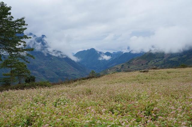 Stunning fields in Northern Vietnam 2