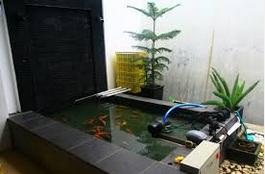 Cara Memelihara Ikan Koi di air kolam yang bagus