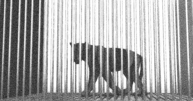 Der Panther Rainer Maria Rilke Pit Poetry In Translation