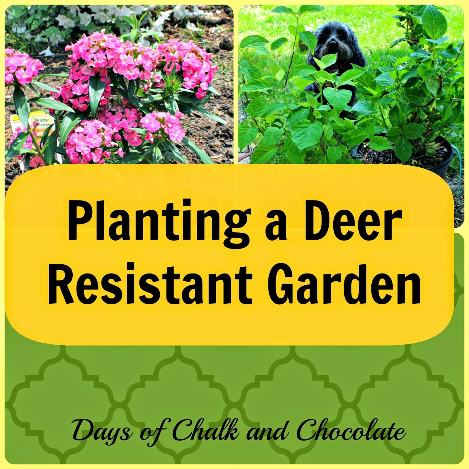 Planting A Deer Resistant Garden