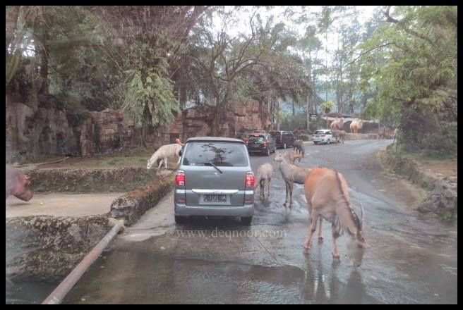 Taman Safari Indonesia 12