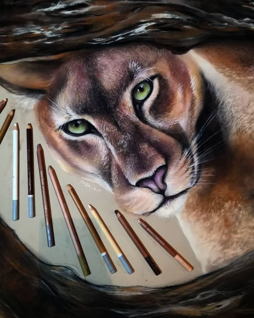 05-The-cougar-Puma-Mountain-Lion-Majla-Colorful-Precise-and-Realistic-Animal-Drawings-www-designstack-co