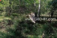 Великая Раёвка. Молодой лес и обломки стен