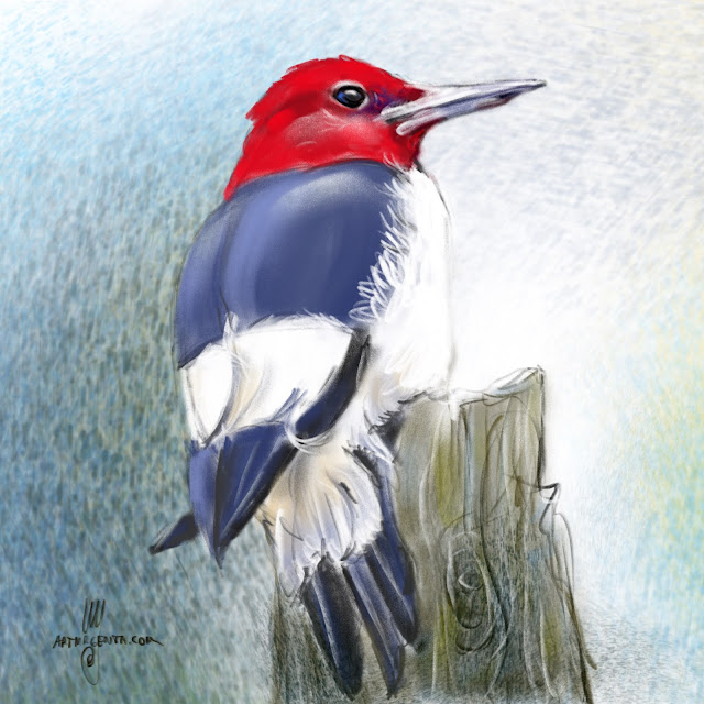 Red-headed woodpecker bird painting by Artmagenta