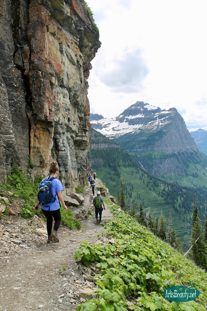highline trail, glacier national park montana family vacation hiking trip kids outdoors mountains wildlife beauty