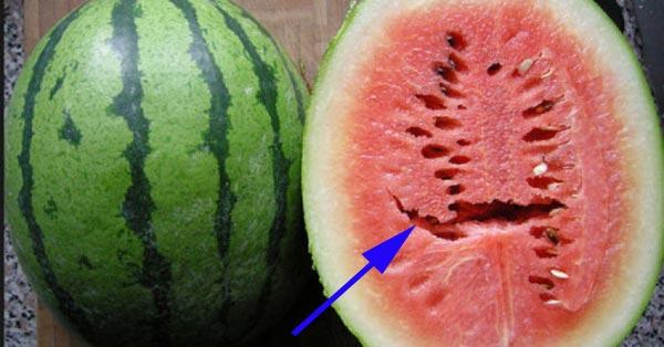 Pernah Lihat Semangka yang Berongga? Sebaiknya Jangan Dimakan, Itu Bisa Membuat Anda Sakit.