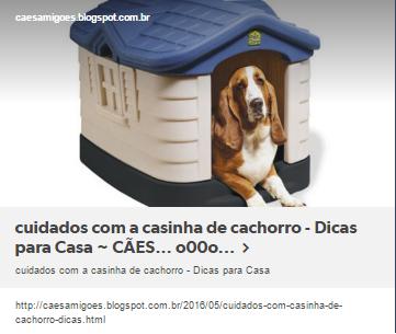 cuidados com a casinha de cachorro - Dicas para Casa