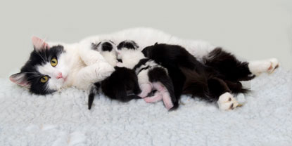Cats Protection mum and kittens