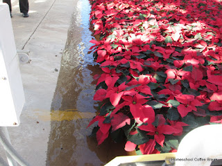 From the High School Lesson Book - A Poinsettia PhotoJournal (Greenhouse Field Trip) on Homeschool Coffee Break @ kympossibleblog.blogspot.com #homeschool #fieldtrip