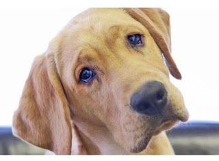 Γνωρίζετε γιατί οι σκύλοι γέρνουν το κεφάλι τους όταν τους μιλάμε;
