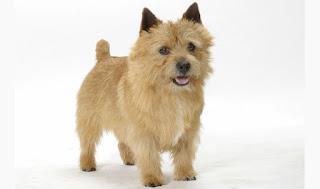 Consejos que pueden convertir a ese problemático Terrier en un mejor animal doméstico