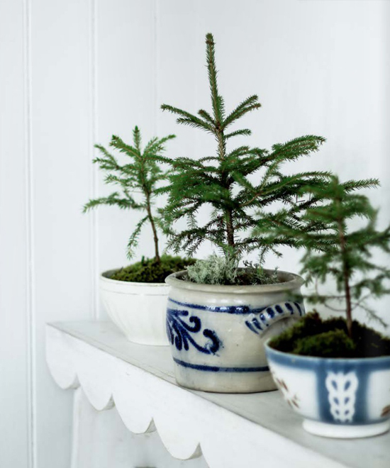 4 by fryd magazine, small trees planted in pretty bowls for a natural holiday decor